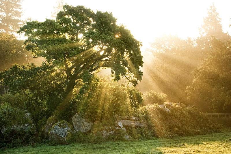 pohon-indah.jpg